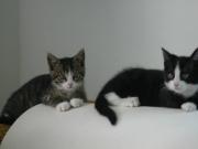 sabrina-kitten-3