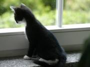 sabrina-kitten-4