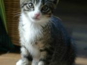 sabrina-kitten-5