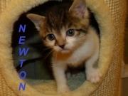 hp-newton