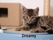 Dreamy1