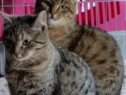Lorena und Lucca