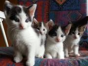 Babys Katzenkinder