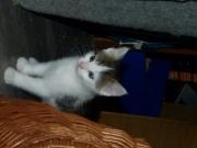 Moritz (3)