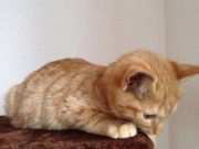 GarfieldJerry1