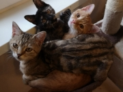 Tabby, Molly und Joshi