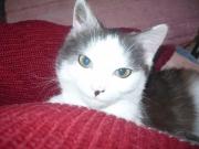 kitty-2
