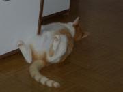 obelix-beim-schlafen