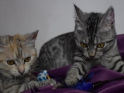 Serafin und Skylar