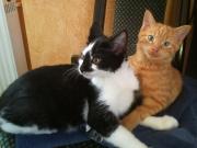 Stevie und Benito1