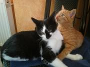Stevie und Benito2