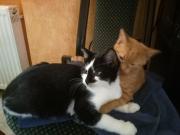 Stevie und Benito3