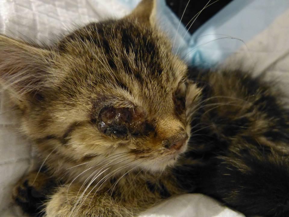 Mir Ist So Kalt Tierhilfe Schweinfurt Katzenschutz In