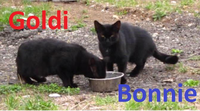 Goldi_Bonni