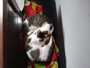 Kimba und Bibi-7