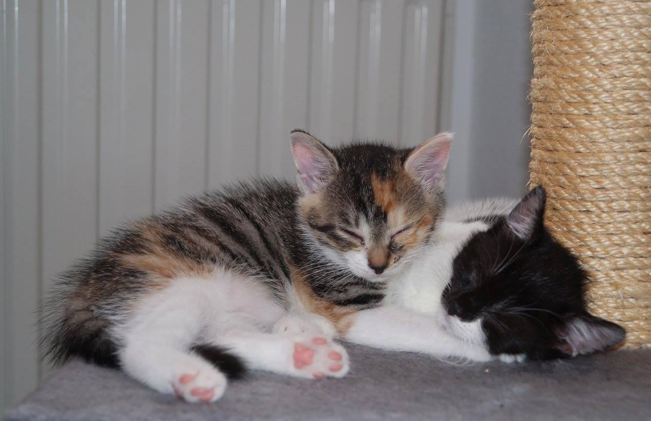 Lotte und Fritzi 2