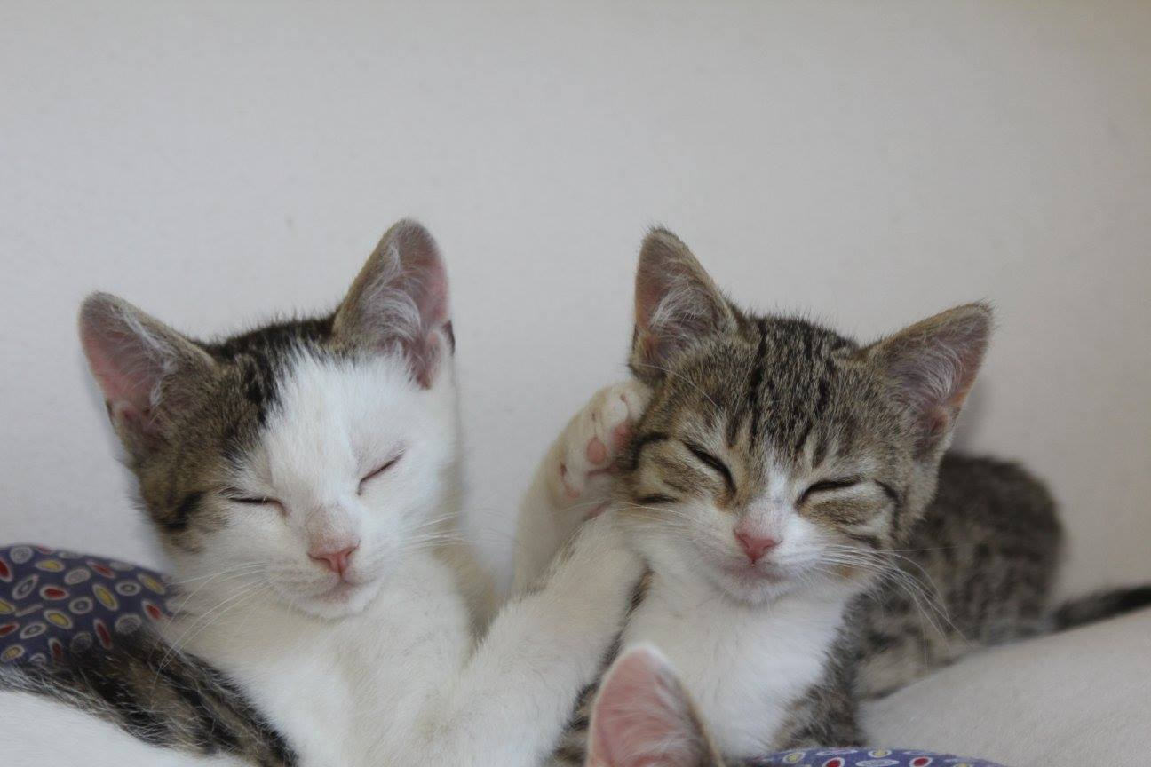 Lovely und Geschwister 3