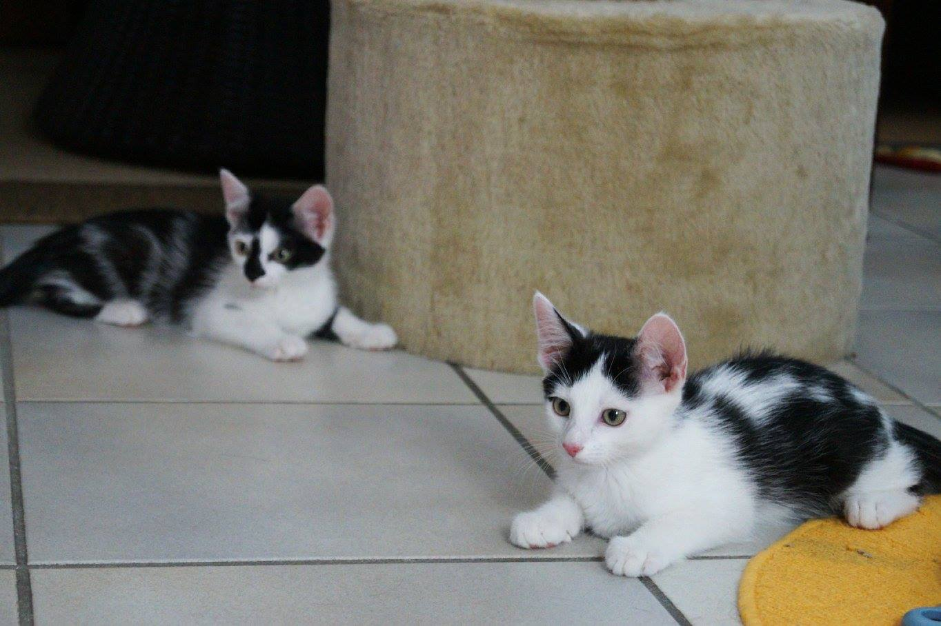 Mila und Shiva