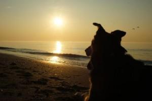 Robin Sonnenuntergang Meer