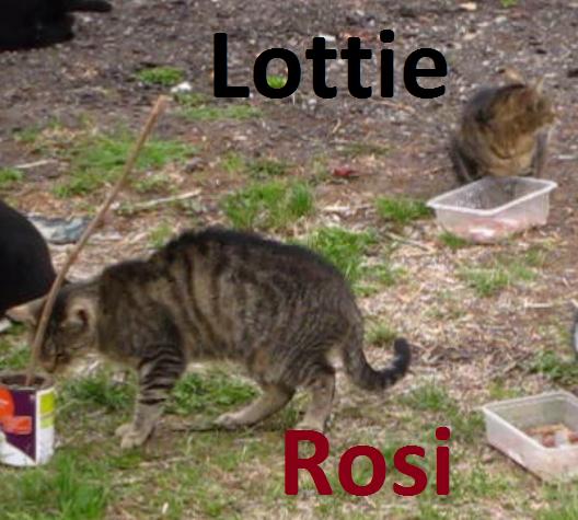 Rosi_Lotti