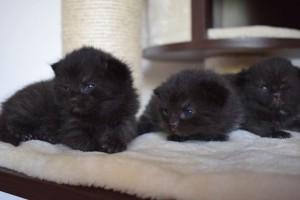 Samiras Babys