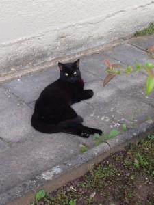 Schwarze Katze (002)