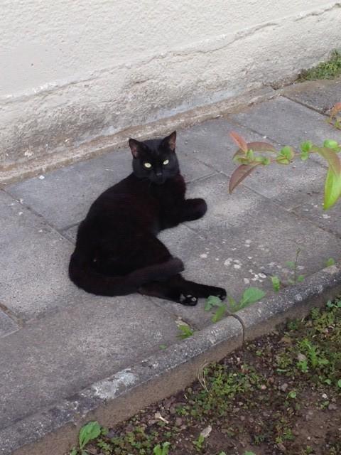 Schwarzer Kater In Sw Nahe Dittelbrunn Zugelaufen Tierhilfe